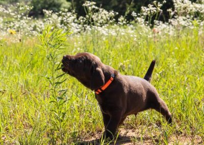 Small Puppies page photo