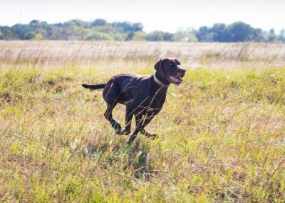 Photo by Martha Walker-Sage showing off her incredible speed as she runs through the field.
