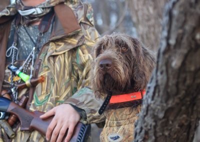 Photo by Martha Walker-VC High Life's V Zeke hunting ducks in the flooded timber.