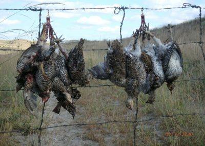 September 2020 Nebraska hunt for Sharptail Grous and Prairie Chickens.